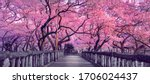 Small photo of Beautiful pink cherry trees blooming extravagantly at the end of a wooden bridge in Park, Japan, Spring scenery of Japanese countryside with amazing sakura (cherry) blossoms