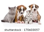 Stock photo group of cats and dogs sitting in front isolated on white background 170603057