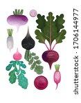 vegetables on a white...   Shutterstock . vector #1706144977