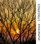 Silhouettes Of Tree Branches On ...