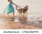 A Girl And Two Husky Dogs On A...