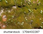 Green Moss And Ivy Covering A...