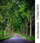 Rural Road Lined By Oak Trees