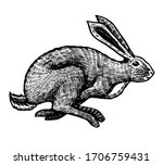 wild hare or rabbit is jumping. ... | Shutterstock .eps vector #1706759431