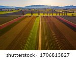 Aerial View Of Tulip Fields I...