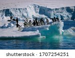 Penguins On An Ice Floe Along...