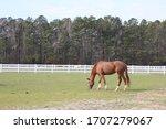 Horse Grazing Near Virginia...