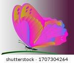 butterfly vector illustration....