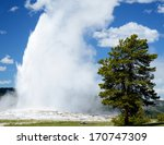 Old Faithful Geyser Shoots...