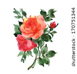 watercolor blooming roses. | Shutterstock . vector #170751344