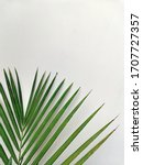 palm leaf for your design. on... | Shutterstock . vector #1707727357