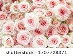 pastel pink roses background....   Shutterstock . vector #1707728371