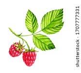 watercolor berries of raspberry ...   Shutterstock . vector #1707777331