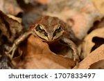 Amphibian In Profile On Last...