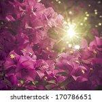 Bougainvillea Flowers In A...