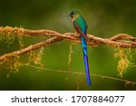 Hummingbird From Peru  Wildlife ...
