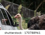 Rhea Approaching Car Window