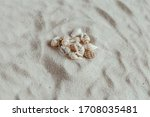 A Group Of Small Sea Shells On...