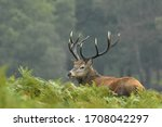 Red Deer In Autumn Colours