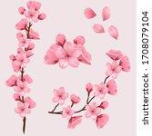 Spring Sakura Cherry Blooming...