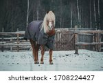 Ute Horse In A Snow Covered...