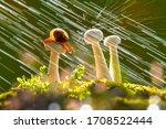 Snail Rained On Mushrooms ...