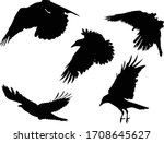 Illustration With Set Of Crow...