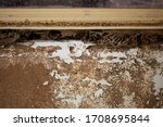 Nest Termite  Background Of...