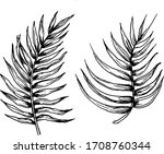 Vector Black And White Palm...