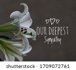 Our Deepest Sympathy Card. Soft ...