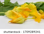 Edible Zuchinni Bud And Flower...