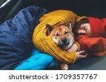 Girl Hug Resting Dog Together...