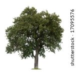isolated apple tree against a... | Shutterstock . vector #17095576