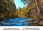 Forest river wild flow landscape. River wild in forest. Forest river flow. Forest river landscape