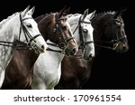 Stock photo portrait of four horses in dressage competition isolated on black 170961554