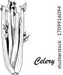 vector botanic illustration...   Shutterstock .eps vector #1709916094