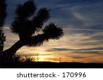 Silhouetted Joshua Tree And...