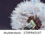 beautiful dew drops on...   Shutterstock . vector #1709965147