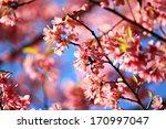 pink flower   Shutterstock . vector #170997047