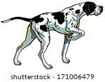 English Pointer Gun Dog Breed ...