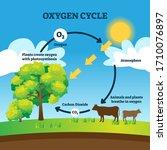 oxygen cycle vector...   Shutterstock .eps vector #1710076897