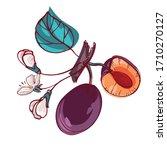 plum. tasty  bright fruits.... | Shutterstock .eps vector #1710270127