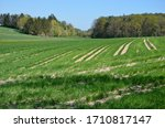 Small photo of Rural landscape in the countryside of Bavaria in Germany, green fields with tractor tracks thereon, a forest on horizon, blue sky background, a sunny day in spring
