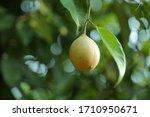 Nutmeg Nutmeg Is A Spice Made...