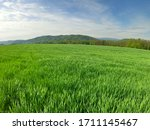 Wide View Of Wheat Field...