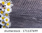 Daisies Flowers Frame