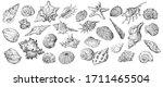 Hand Drawing Set Of Seashells....