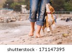 Stock photo puppy beagle running near it owner legs close up image 171147395