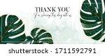 monstera evergreen tropical... | Shutterstock .eps vector #1711592791