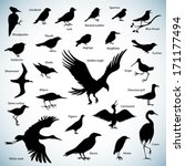 set of birds silhouettes on... | Shutterstock .eps vector #171177494